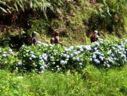 Madeira09