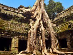 Camboya01